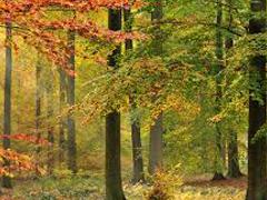 Les bois privés